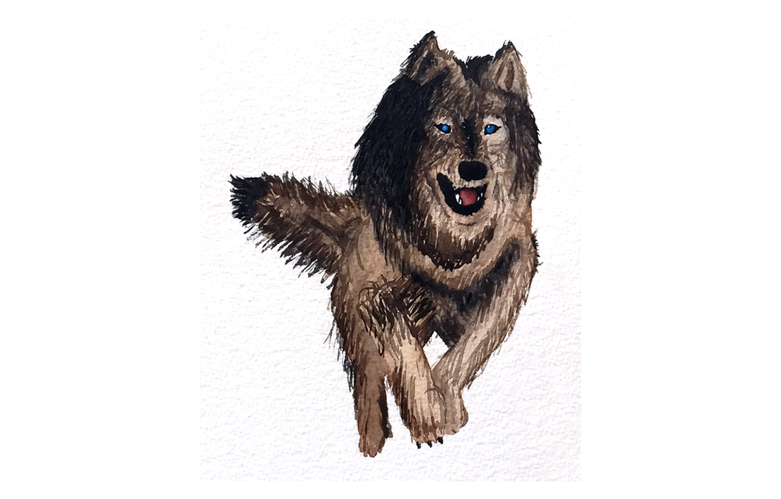 Wolf Watercolor Illustration
